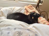 ネコ : 振り向き - にゃんこと暮らす・アメリカ・アパート(その2)