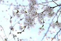 春に誘われたわけじゃない - 空のむこうに ~自転車徒然 ほんのりと~