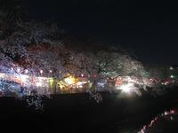大岡川の夜桜 - 神奈川徒歩々旅