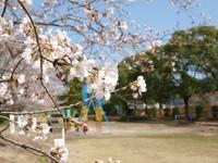 初桜 - いつかみたソラ