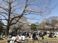 桜の一日 - 木洩れ日のなかで