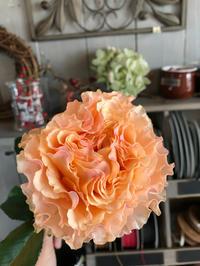 桜の季節は、出会いと別れ - ブレスガーデン Breath Garden 大阪・泉南のお花屋さんです。バルーンもはじめました。