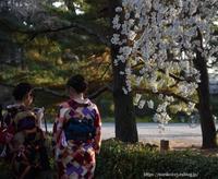 さくら2018 - Noriko's Photo  -light & shadow-