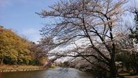 3月28日    近場で桜ハンターZ  ④ - マルコの日記