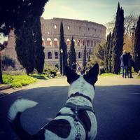 カルロ8世ローマを歩く - Via Bella Italia ベッライタリア通りから