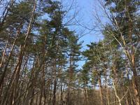 森の観察会 - rin時日報3