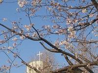 お花畑♪ - 愛・喜び・平和~今日、この日に感謝をこめて~