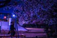 ★夜桜 - 一写入魂