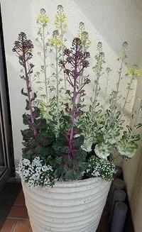 インターンシップで、インスタ映えマップ - 手柄山温室植物園ブログ 『山の上から花だより』