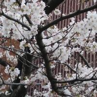 お花見part1 - プリプエママのHAPPYな一日