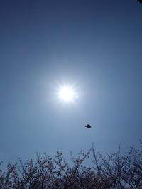 今年の桜★陶芸クラブ - 月夜飛行船