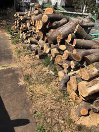 材料はどこで手に入れるのか - 首ばかり作る木彫家のブログ