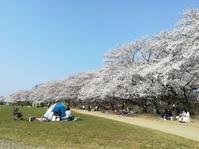 満開!桜も人も - 幸福な時間
