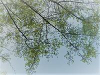 都会へ花見に行くの巻 - hibariの巣
