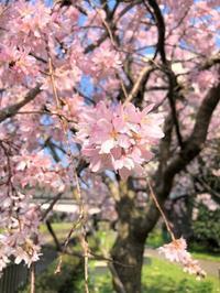 □毎日、桜とお城 - 心地よい暮らし Vie confortable
