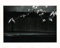 Leaf#27 - VELFIO