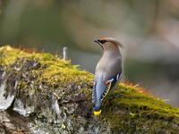 ありがとうございました - 『彩の国ピンボケ野鳥写真館』