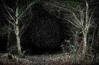 エリー・デイビースの「おとぎの森」のフォト - 寒 冬秀~つれづれなるままに写メ