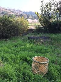 畑でつかう籠を編みました - 菜園のある暮らし