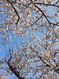 2018年4月の予定 - アロマセラピストMakiのブログ 秋谷シーサイド日記