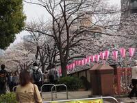 目黒川沿いのお花見 - エンジェルの画日記・音楽の散歩道