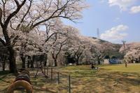 さくら咲く学校 - ecocoro日和