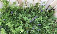 留守中の 庭 - mypotteaセンチメンタルな日々with photos 3