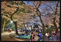 上野公園の桜 HDR Part 2 - TI Photograph & Jazz
