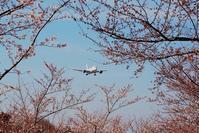 成田市空の駅「さくらの山公園」では直ぐ頭の近くを通過する飛行機をせいぜい100mm迄のレンズでも良く撮れる♪ - 『私のデジタル写真眼』