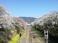 山北町へ散歩!そんで桜からの角打ち!『横山酒店』 - 三毛猫酒場で朝から酎ハイ。。