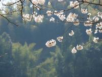 春の光 - いつかみたソラ