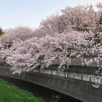桜 - Clean up Life~お片づけサポート~