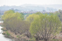 多摩川の春 - 立川は Ecoutezbien  えくてびあん