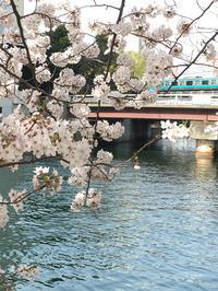 もう春 - ブログkato