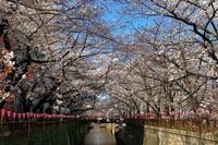 東京で桜見物 - デジカメ入門