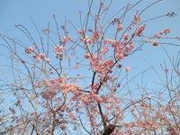 春の訪れ - 愛・喜び・平和~今日、この日に感謝をこめて~