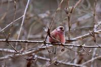 林道探鳥 - 平さん