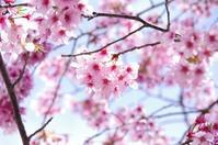 SPRING2018: Wind is blowing, Spring is blooming - inthecube