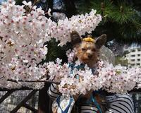 お花見散歩 - りりぃ達といっしょ+りお