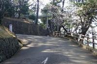 桜!サクラ!さくら!\(^o^)/ - 手柄山温室植物園ブログ 『山の上から花だより』