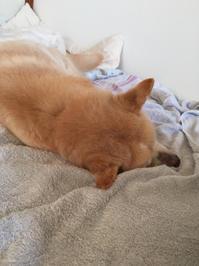 夜中に咳が - 老犬。犬生これから。たまに猫