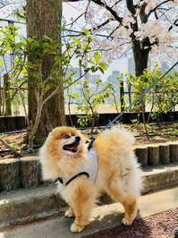 定期検診 3/30 - 老犬。犬生これから。