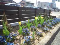 チューリプが咲きました♪ - ユニタブログ
