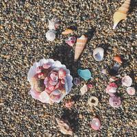 ウズイチモンジ多め - on the shore
