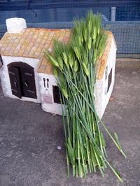 麦の収穫 - M's Factory