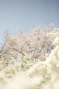 春うらら@都立舎人公園 - みるはな写真くらぶ