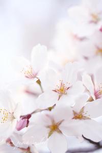 春爛漫 - 感じるまま、気ままなblog