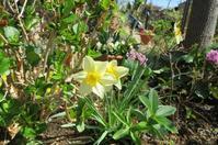 春の庭 - ひだまりの庭 ~ヒネモスノタリ~