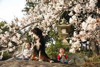 男の子3人、神社でお花見したよ^^♪(孫たちとロジャーの桜週間その①:3月29日) - Reon with LR & Roses