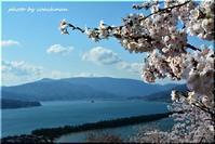 桜下に霞む天橋立 - 北海道photo一撮り旅
